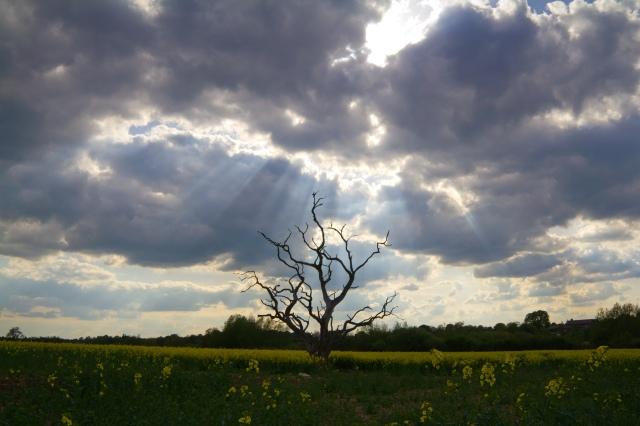 The Dead Tree of Warwick